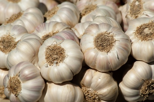 garlic-growing-guide
